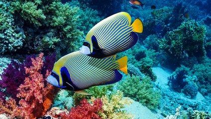 Риб - фото 1