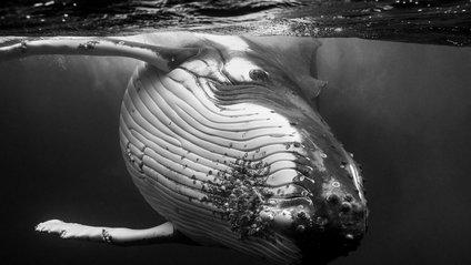 Гіганти: фото китів, від яких перехоплює дух - фото 1