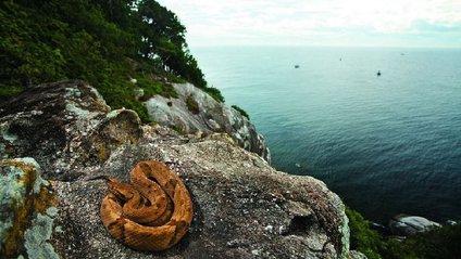 Зміїний острів - фото 1