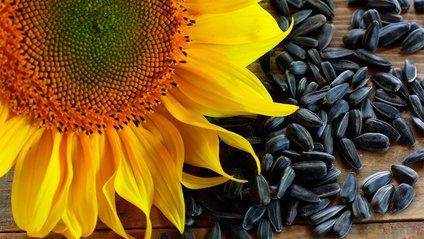 Насіння соняшника виявилося не таким вже й корисним - фото 1