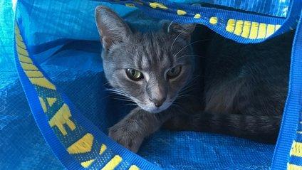 IKEA The Blue Bag - фото 1