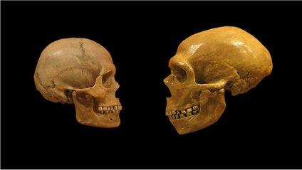 Homo sapiens - фото 1