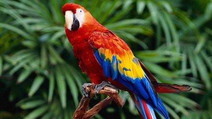Папуга - фото 1