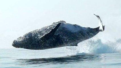 Горбатий кит - фото 1