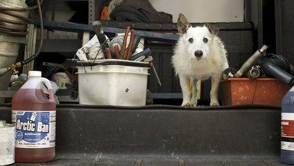 Милі фото стареньких собак, які вас зворушать - фото 1