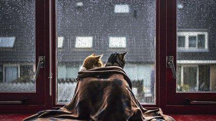 Дощ - фото 1