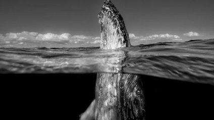 Вражаючі світлини фотоконкурсу журналу National Geographic - фото 1