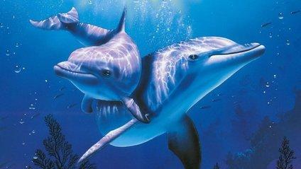Самки дельфінів можуть захищатися від вагітності - фото 1