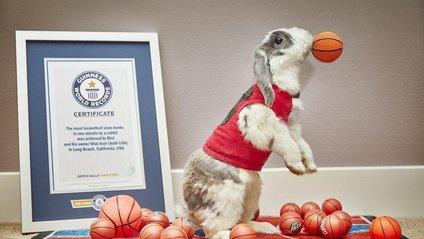 Кролик-рекордсмен - фото 1