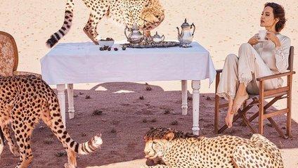 Анджеліна Джолі знялася в розкішній фотосесії з гепардами - фото 1