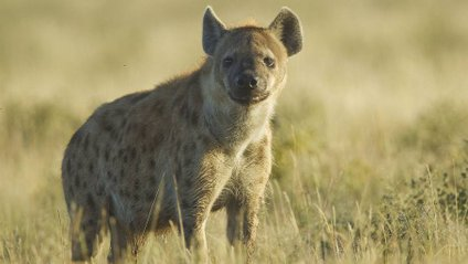 В Африці знайшли невідомих хижаків - фото 1