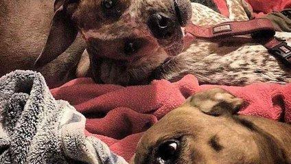 Дуже дивні собаки - фото 1
