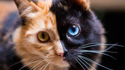 Казковий кіт :) - фото 1