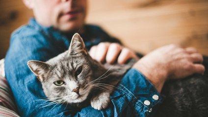 А ви любите котиків? - фото 1