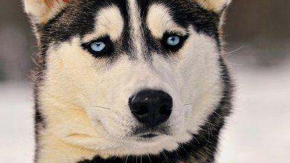 Ви не повірите, що роблять собаки - фото 1