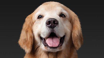 Собаки продовжують життя - фото 1