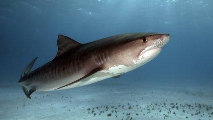 В Австралії серфінгіст зумів відбитися від акули кулаками - фото 1