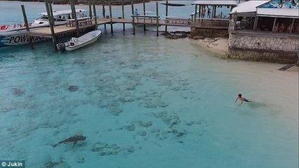 Хлопчик на Багамах дивом врятувався від чотирьох акул - фото 1