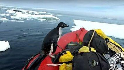 Пінгвін, який застрибнув в човен до вчених, став новою зіркою мережі - фото 1