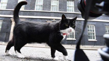 Кіт МЗС Великобританії опинився на жорсткій дієті - фото 1