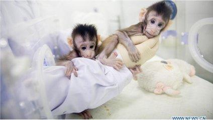 Перші в світі клоновані примати - фото 1