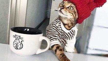 Кішка стала зіркою Instagram через своє незвичайне життя - фото 1
