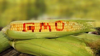 Науковці зробили несподіване відкриття про ГМО - фото 1