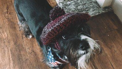 Кумедний пес у шапці став зіркою мережі: фотофакт - фото 1