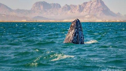 Американських туристів можуть посадити за миле відео з китом - фото 1