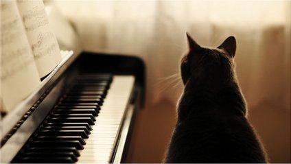 Кіт-піаніст став зіркою мережі: кумедне відео - фото 1