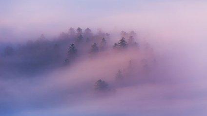 Ранкові Карпати у тумані: чарівні фото - фото 1