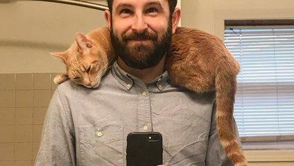 Як кіт може врятувати від робочого дня: чарівне фото - фото 1