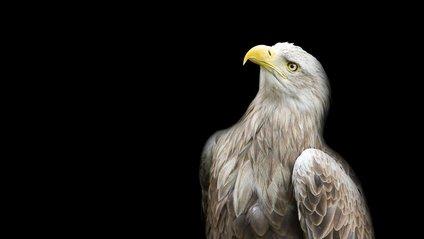 Хижі погляди: польський фотограф робить неймовірні портрети птахів - фото 1