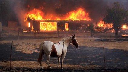Пожежа може спалити більше 600 будівель, - фото 1