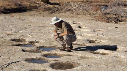 Поруч зі слідами вчені також виявили нори - фото 1
