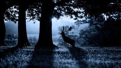 Ось чому тварини віддають перевагу ночі - фото 1