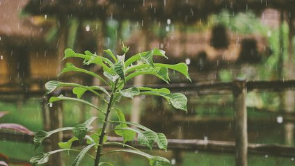 Синоптик попередила, в яких областях України пройдуть дощі - фото 1