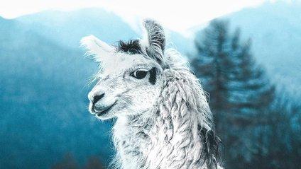 Вражаючі знімки тварин від фотографа-самоучки - фото 1