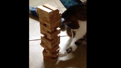 Весела гра з котом стала хітом мережі - фото 1