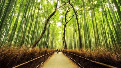Деякі види бамбука (всього їх 1 200) цвітуть дуже рідко - фото 1