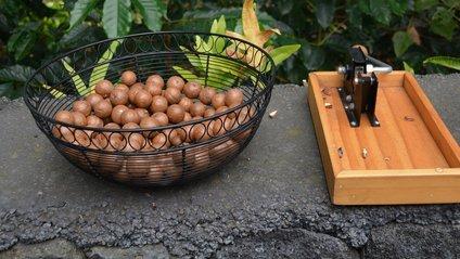 Всі види горіхів мають дуже низькийглікемічнийіндекс - фото 1