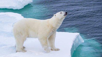 У Норвегії полярний ведмідь заліз у вікно готелю і застряг - фото 1