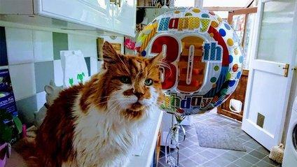 Найстаріший у світі кіт відсвяткував своє 30-річчя - фото 1