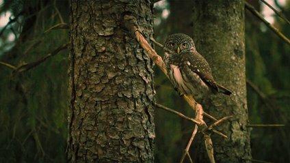 Чарівна сова-мисливець підкорила мережу - фото 1