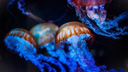 У Дніпрі завелися медузи - фото 1