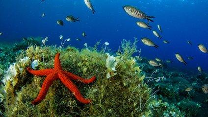 Як виглядають коралові ліси в підводних вулканах Сицилії - фото 1