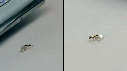 Дивіться кумедне відео з мурахою, яка намагається поцупити діамант - фото 1