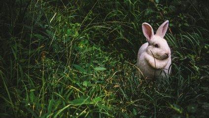 Маленький кролиу став зіркою мережі - фото 1