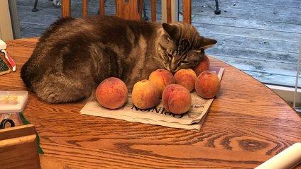 Користувачі висловили здивування незвичним уподобанням кота - фото 1