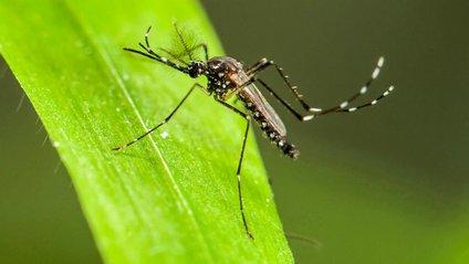 У Фінляндії зникли практично всі комарі - фото 1